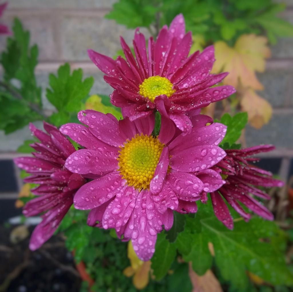 Flowers by richardcreese