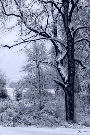 Winter Wonderland by skipt07