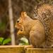 Mr Squirrel Having His Snack!