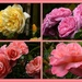 Yvonnes Roses...