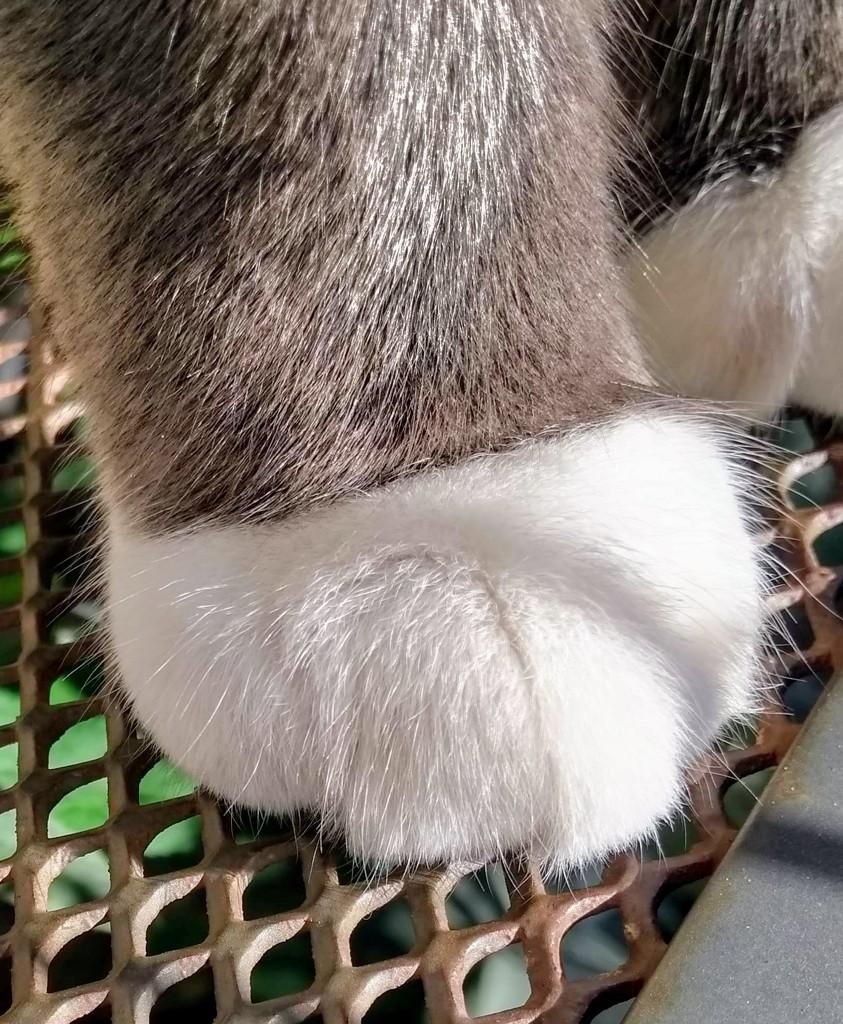 White Sock (Trevor) by 4rky
