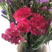 Beautiful flowers from Ooty