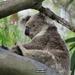 finally ...  by koalagardens
