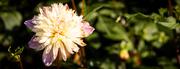 6th Nov 2018 - Flower