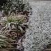 Snow Teaser