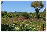 23rd Nov 2018 - Auackland Botanic Gardens
