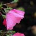 Raindrops by seattlite