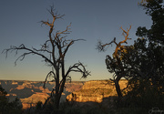 23rd Nov 2018 - Trees Dancing In Golden Hour