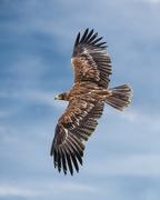 21st Nov 2018 - Where eagles dare