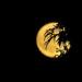 Full moon last Night by radiogirl