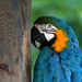 Macaw by mittens