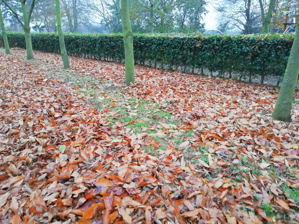The last leaves of Autumn?  by judithdeacon
