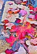 24th Nov 2018 - Autumn Was Awakened