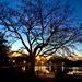 Colonial Lake at sunset, Charleston, South Carolina