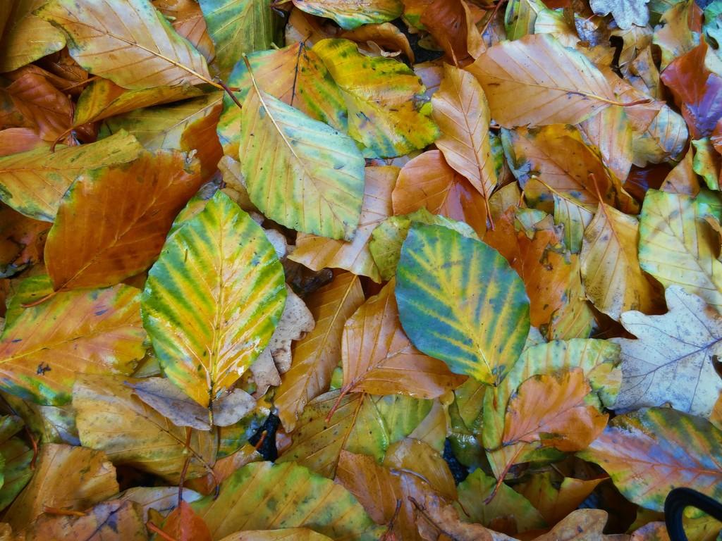 autumn leaves by gijsje