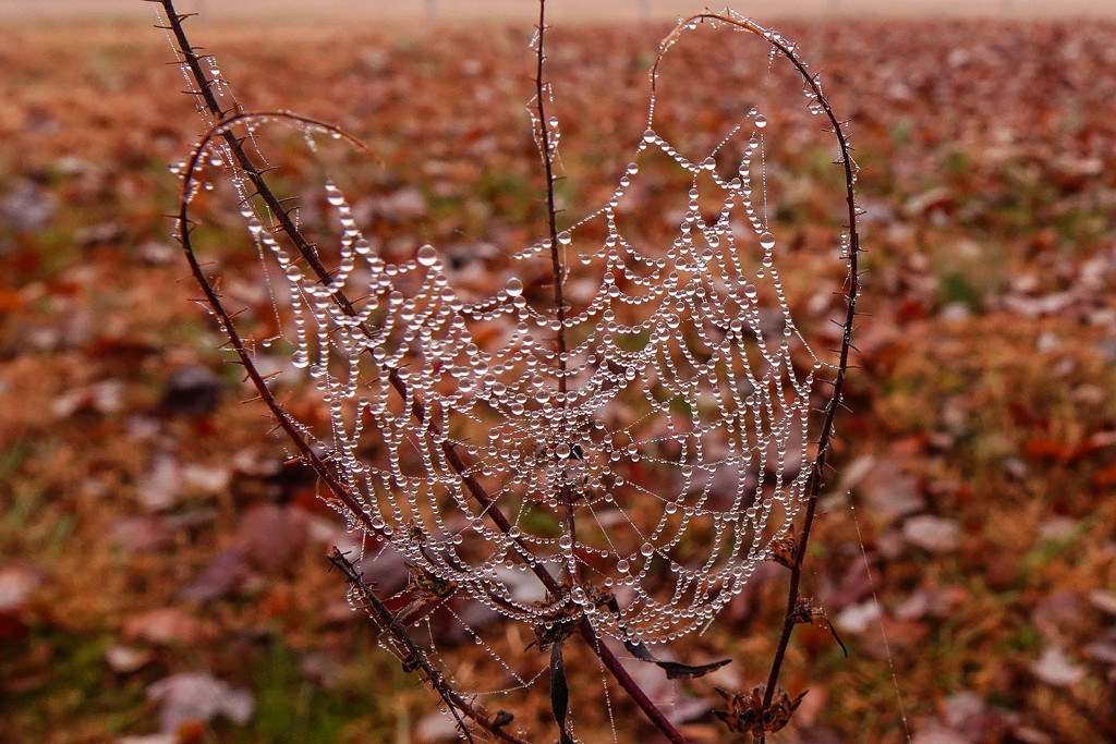 A Very Careful Spider by milaniet