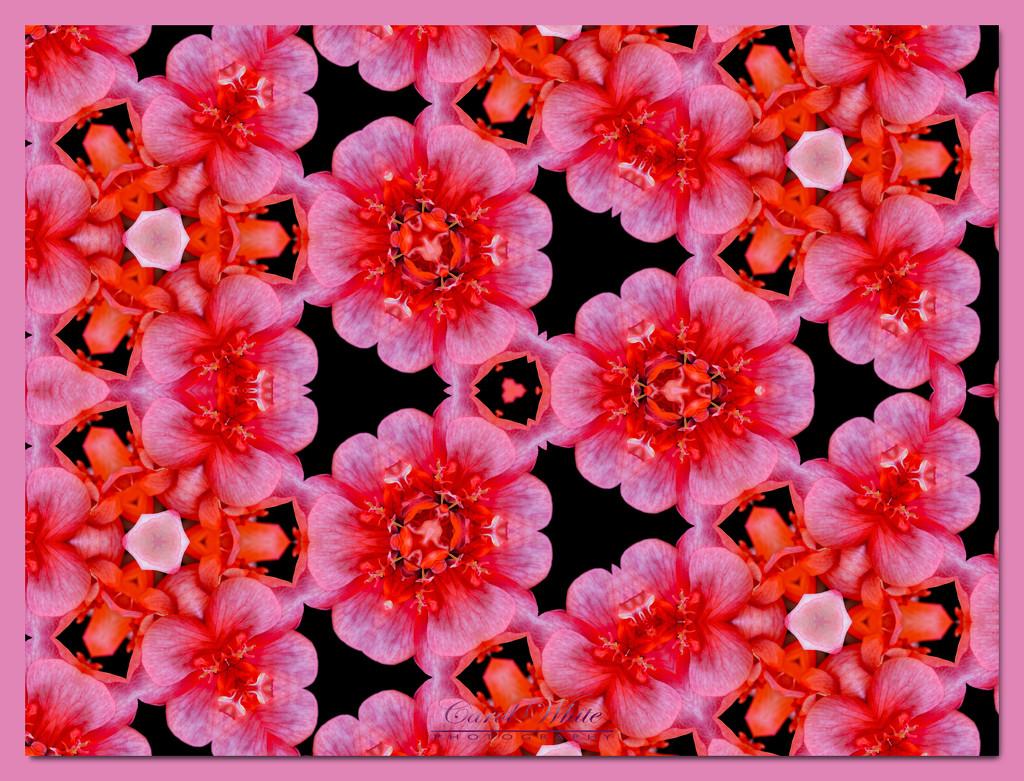 Kaleidoscope Of Flowers by carolmw