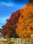 25th Nov 2018 - Fall color through the windshield
