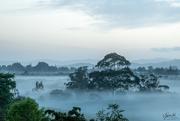 25th Nov 2018 - Misty morning