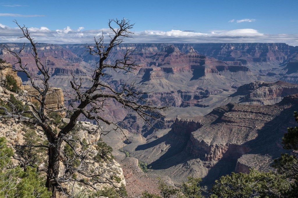 Photographing Trees at the Grand Canyon by jyokota