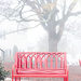 Bench in the Fog
