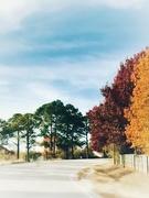 26th Nov 2018 - Yesterday's trees