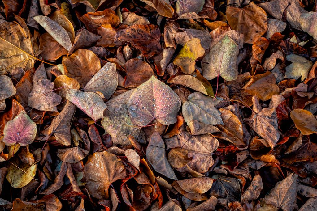 Autumn by mikegifford