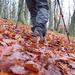 A Leafy Walk by jamibann