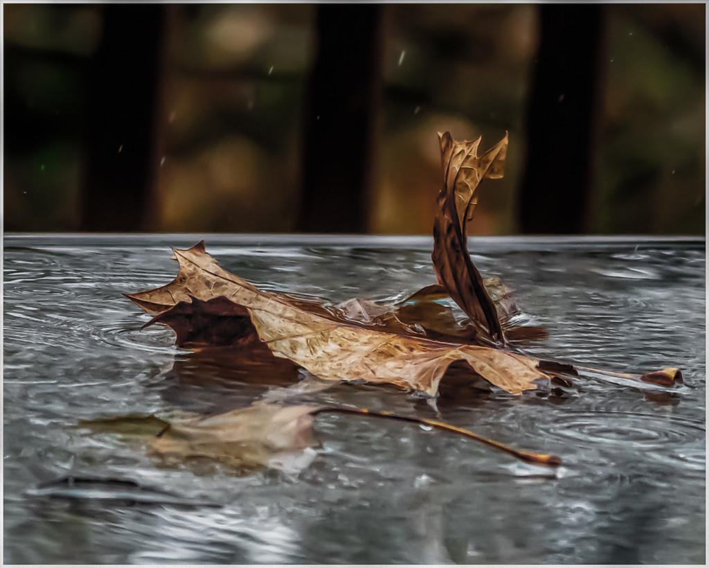 rainy day by jernst1779