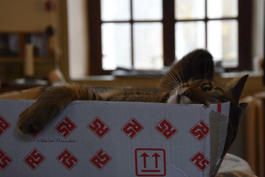 life in box!  by parisouailleurs