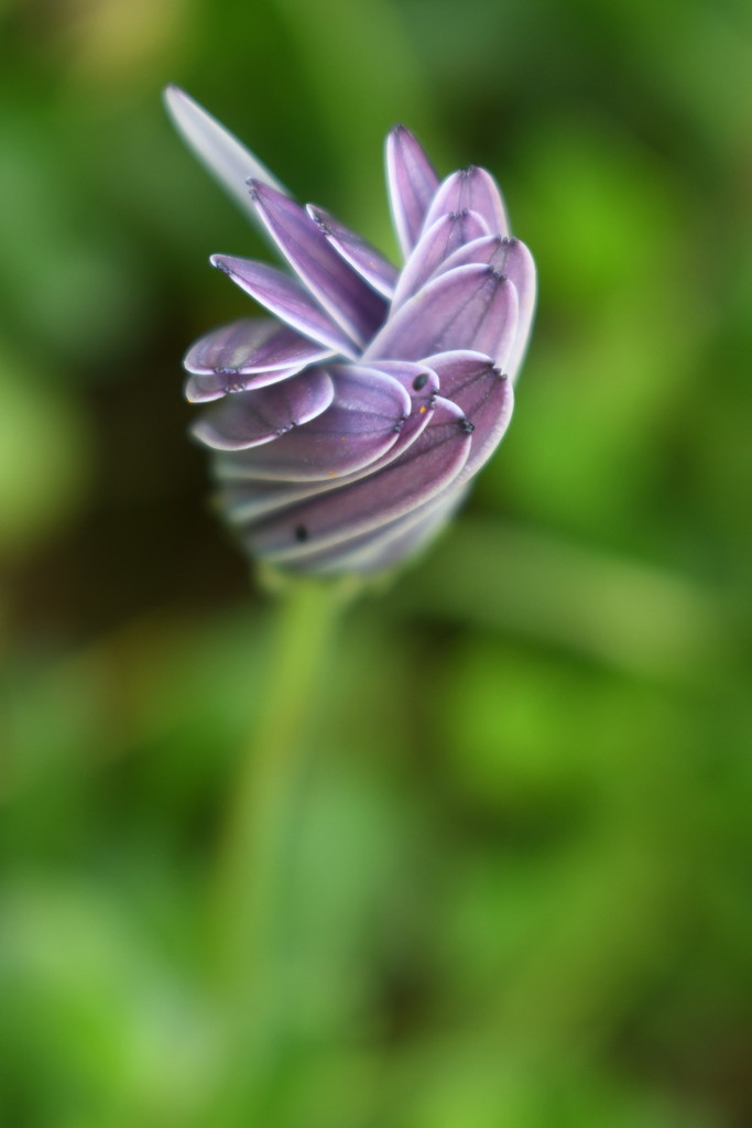 Twisted Flower by kgolab