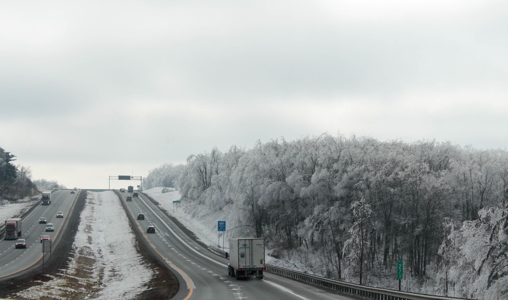 Icy trees on the highway by mittens