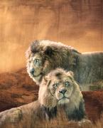 27th Nov 2018 - Lions Revamped