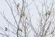 26th Nov 2018 - Birds Up A Tree