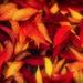 Fallen Leaves  by joysfocus