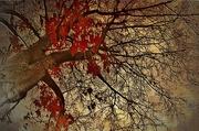 27th Nov 2018 - It's Still Autumn
