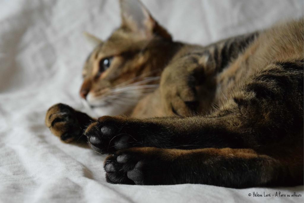black feet by parisouailleurs
