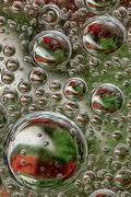 29th Nov 2018 - Christmas bubbles