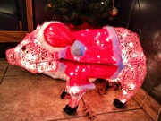 28th Nov 2018 - The Pig is dressed for Christmas.