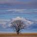 prairie sentinel by aecasey