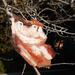 Owl in My Tree