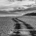 The Boardwalk by fbailey