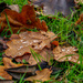 Autumn Leaves And Raindrops