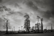 29th Nov 2018 - Paimpont 2018: Day 249 - Trees and Telephone Poles