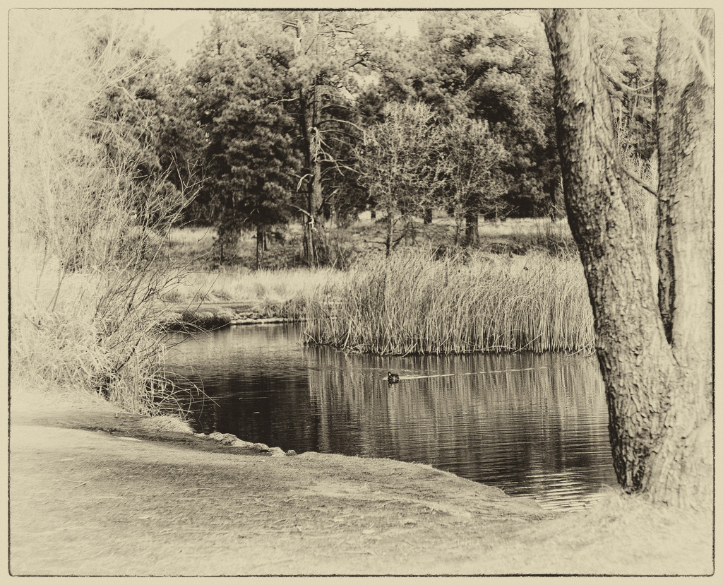 Pond by joysabin
