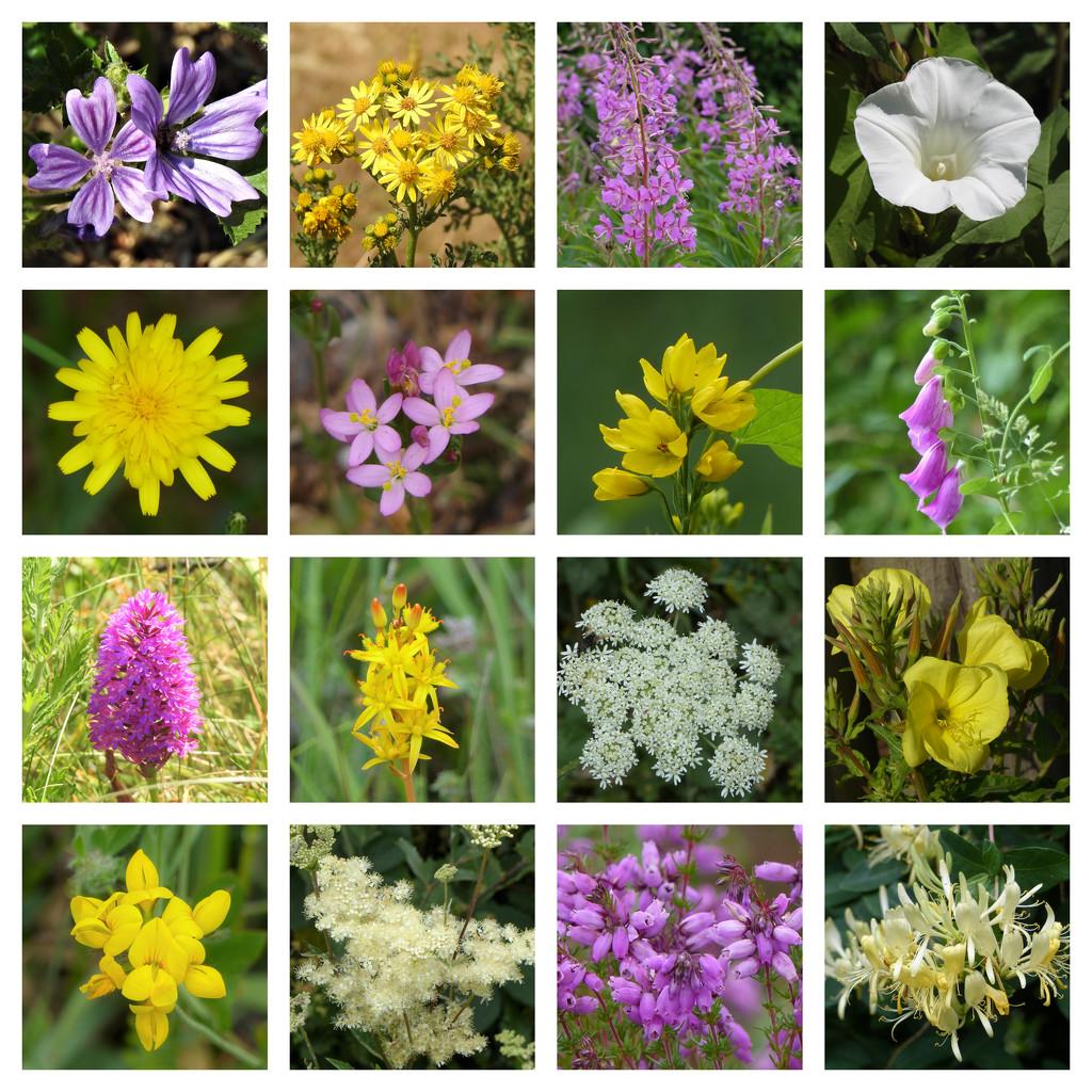 Dorset Wild Flowers  by susiemc