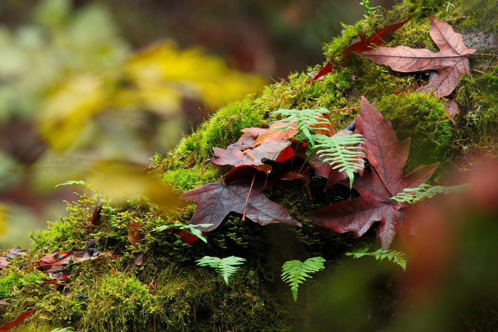 Through the leafs by teriyakih