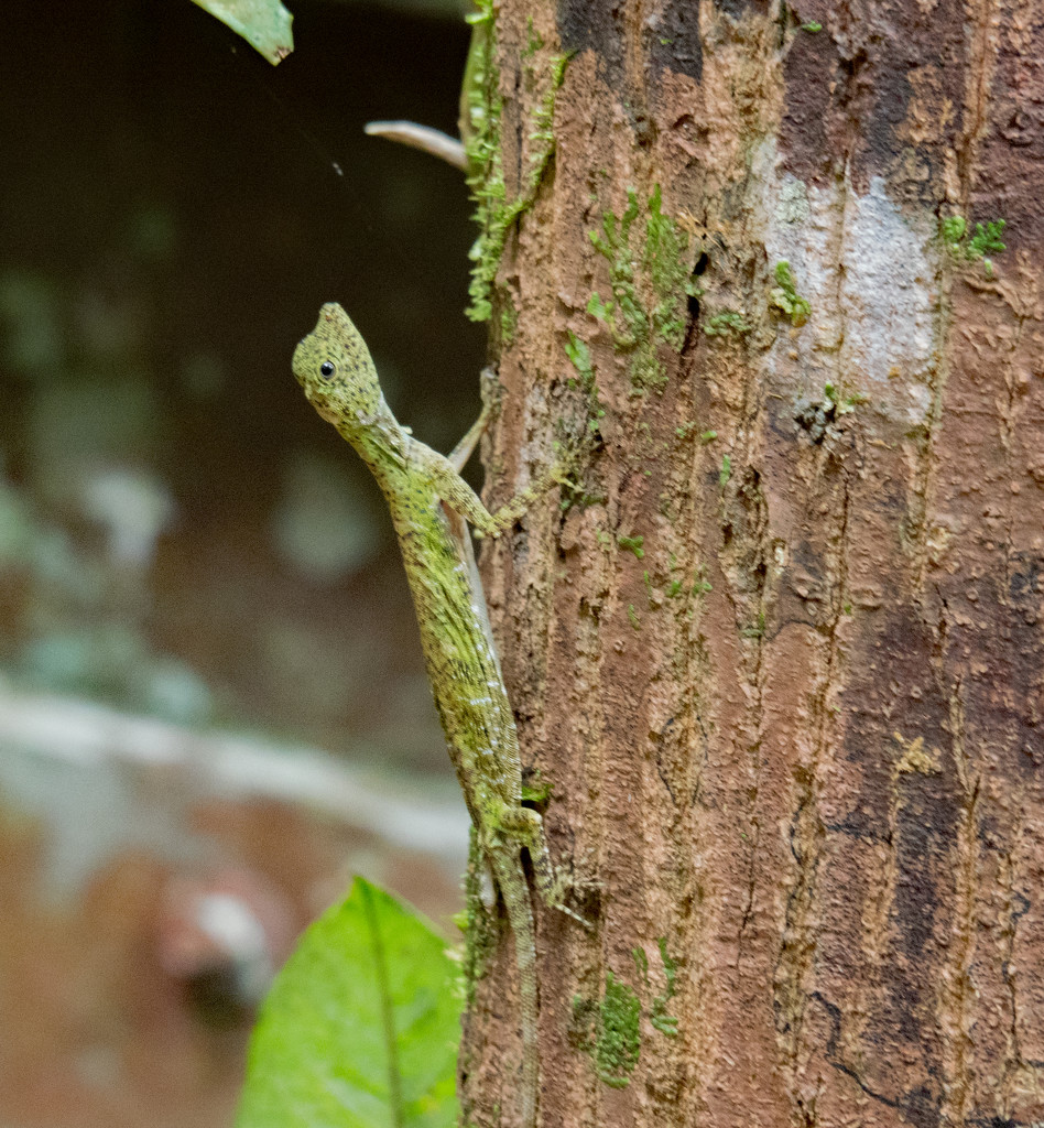 Rain Forest Lizard by ianjb21