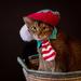 The Catmas Elf