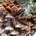 Holly Berries, Pine and Cone
